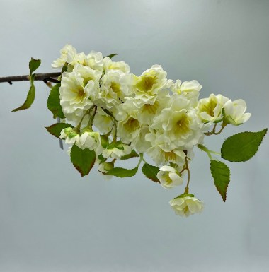 Silk Almond Tree