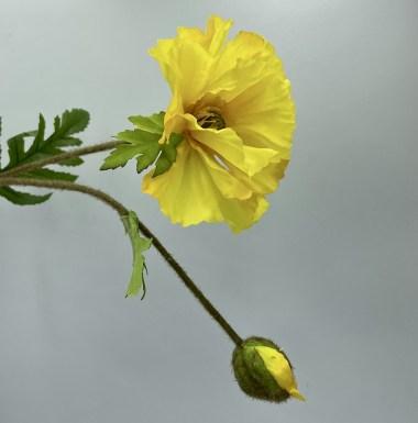 Silk Hibiscus Yellow
