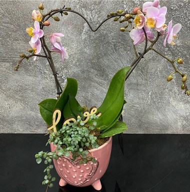 Heart Orchid