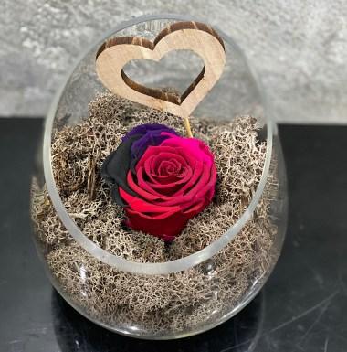 4 Ever Rose Bicolour