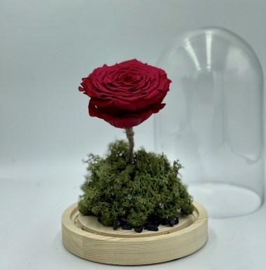 4ever Rose Pink