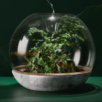 Τα πέντε φυτά που θα σας βοηθήσουν να κοιμηθείτε καλύτερα!